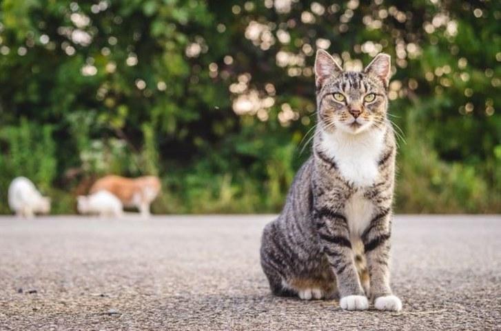 Photo: I Iz Cat