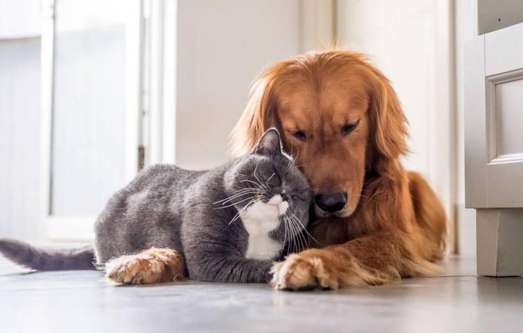 Photo: Pets Blogroll