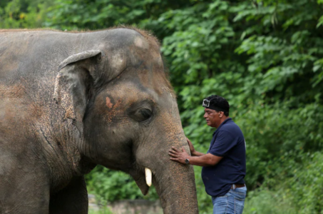 Kaavan the 'Lonely Elephant' Is Fit For Travel