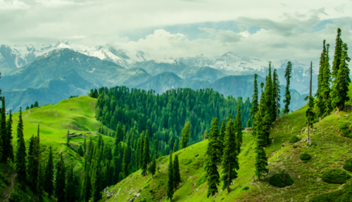 Pakistan Declared 'Champion for Nature' By World Economic Forum