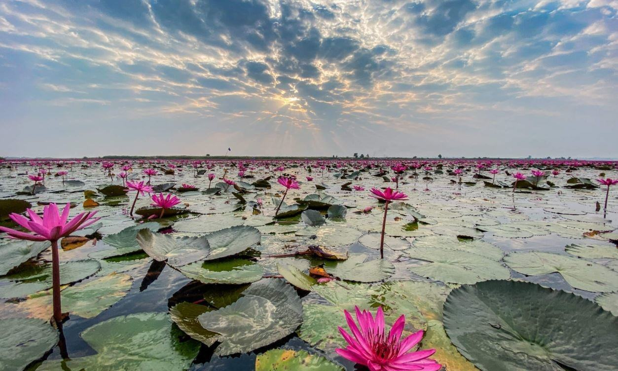 Lotus Lake in Islamabad Serves as New Tourist Hub