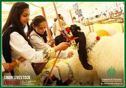 The Sindh Livestock Expo 2021 begins!