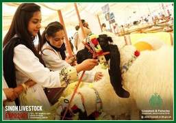Sindh Livestock Expo 2021: Seamlessly Successful.