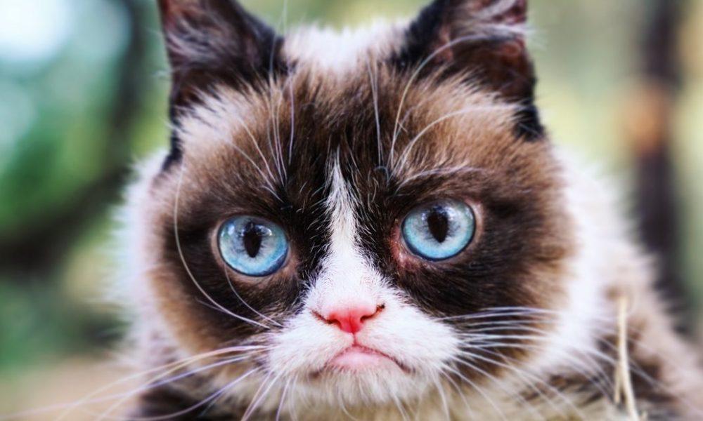 Grumpy Cat Gone Too Soon